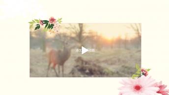 【住在森林里的公主】幸福婚礼模版第五季示例7