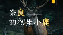 【so简约】林深时见鹿32