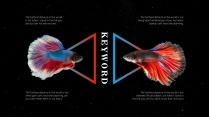 【我家地理杂志】寻找星空中最惊艳的那只斗鱼示例5