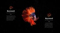 【我家地理杂志】寻找星空中最惊艳的那只斗鱼示例3