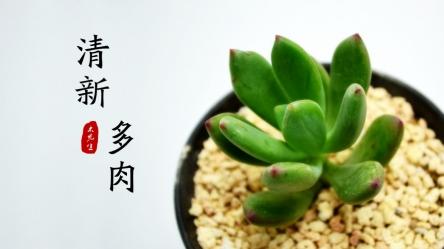 【【我家地理杂志】小清新文艺范多肉植物杂志ppt