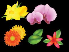 手绘花卉示例1
