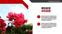 红色商企PPT模板-----月季花示例4