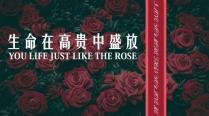 【玫瑰】欧美简约实用商业计划书PPT模板