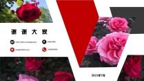 红色商企PPT模板-----月季花示例7