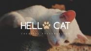 【超美画报】可爱猫咪杂志风模板5.0