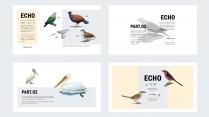 【异世界】像鸟类图鉴一样的PPT模板示例6